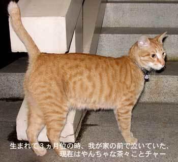 cya350_09.jpg