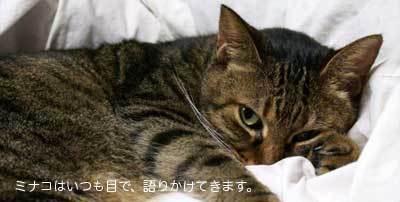 minako400_05.jpg